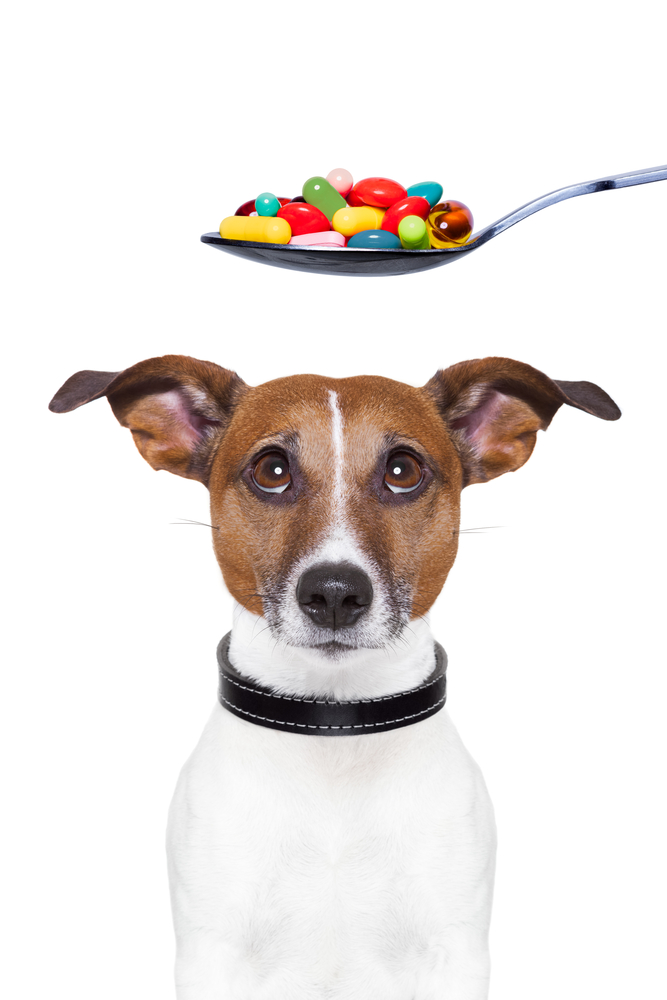 how to give pills to dogs - dog looking at spoonful of pills